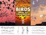 Birds Brush Set by ZsoltKosa