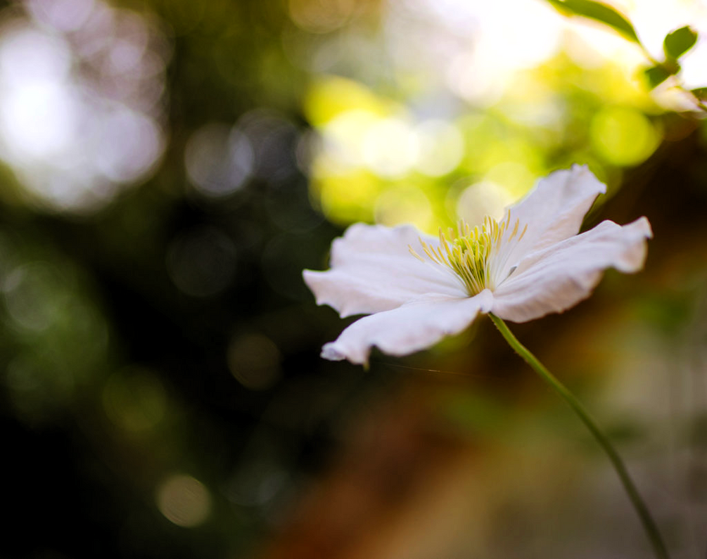 Bokeh by dandelion-field