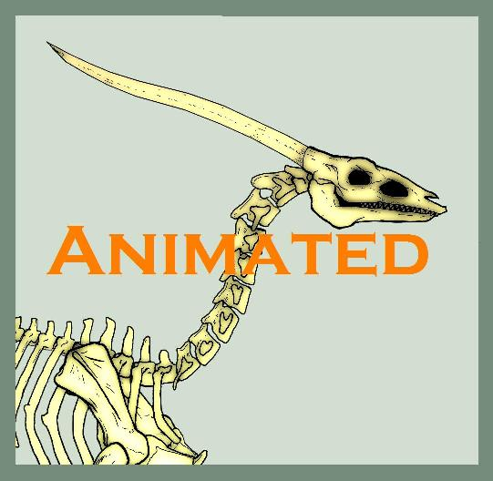 Cenedra: Dragon Skeleton Walk