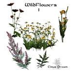 Wildflowers Stock 1