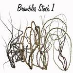Brambles Stock 1