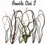 Brambles Stock 2 by TinusDream