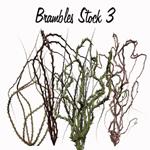 Brambles Stock 3