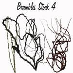 Brambles Stock 4