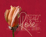 Beautiful Rosa by starsista