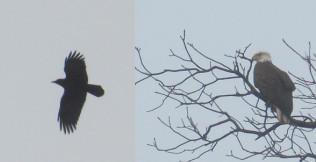 Birds stock pack. by Trippy-CS
