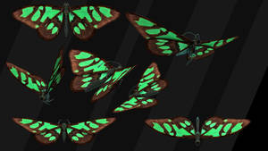 Stock Isolated Monarch butterfly
