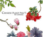 Chinese Plant Png