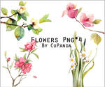 Flowers Png(3)