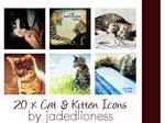 Cat and Kitten Icons