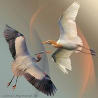 Egrets png transparent by libidules