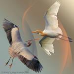 Egrets png transparent