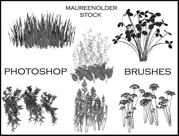 STOCK PHOTOSHOP BRUSHES plants by MaureenOlder