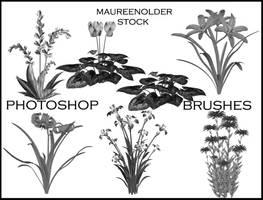 STOCK PHOTOSHOP BRUSHES flower by MaureenOlder