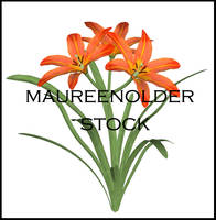 STOCK PSD 3D lilly by MaureenOlder