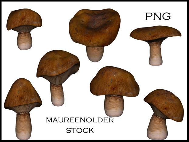 STOCK PNG mushroom by MaureenOlder