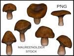 STOCK PNG mushroom