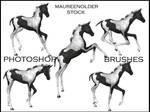 STOCK PHOTOSHOP BRUSH foal