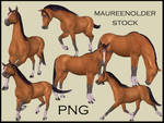STOCK PNG horse