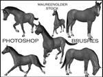 STOCK PHOTOSHOP BRUSHES horse