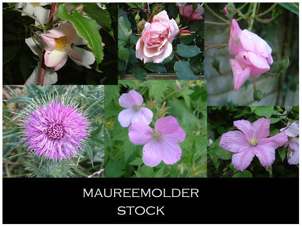 STOCK PHOTO pink flowers by MaureenOlder