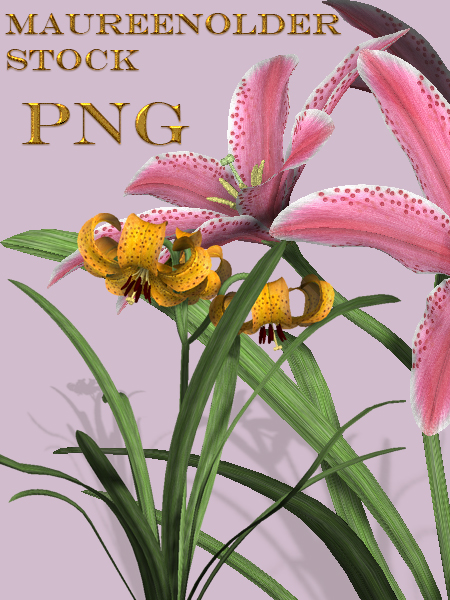 STOCK PNG 2 lillies