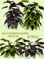 STOCK PNG jungle plants by MaureenOlder