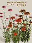 STOCK PNG flower by MaureenOlder