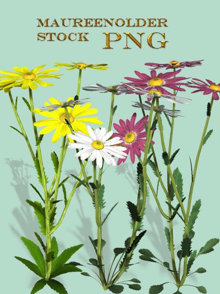 STOCK PNG daisies by MaureenOlder