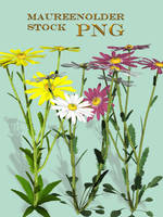 STOCK PNG daisies by MaureenOlder