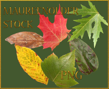 STOCK PNG leaves