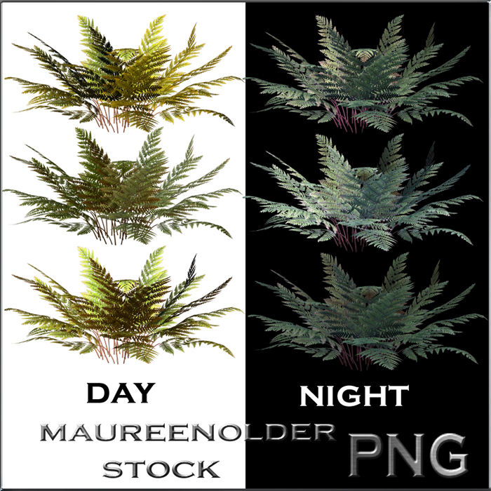 STOCK PNG ferns night and day