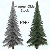 STOCK PNG fir tree by MaureenOlder