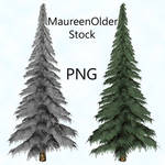 STOCK PNG fir tree