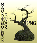 STOCK PNG treerock