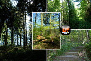 Black Forest 5 pics Pack