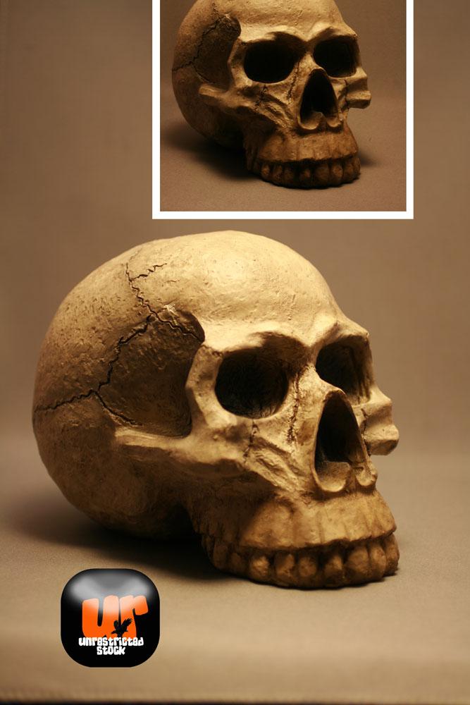 Unrestricted Skull Stock