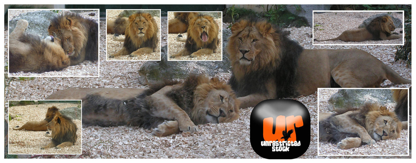 Lions Pack by Unrestricted-Stock