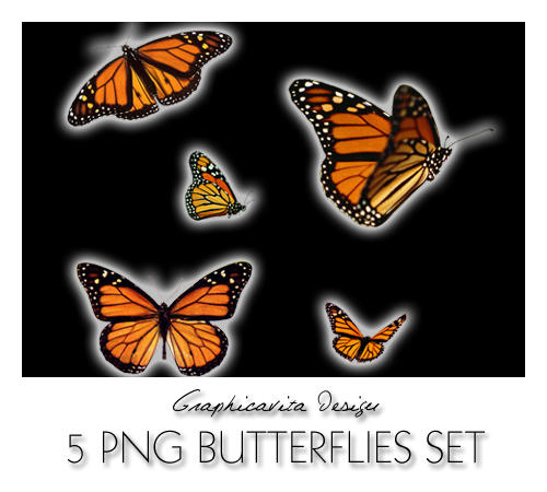 5 PNG Butterflies by graphicavita