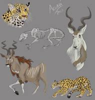 Leopard, Addax and Kudu by LobaFeroz