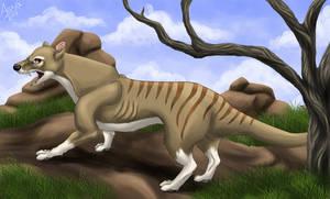 Thylacine by LobaFeroz