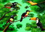 five toucan species