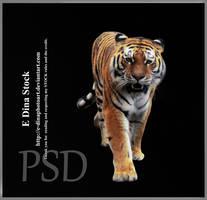 HQ PSD Stock Tiger by E-DinaPhotoArt