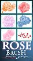 6 Brush Rose PS