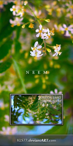 N  E  E  M by KLS77