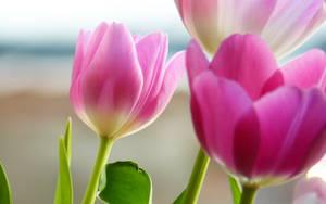 Tulips in Spring by soelu412