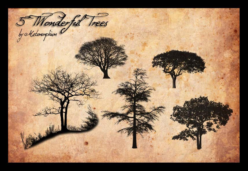 5 Trees by Metamorphium