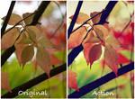 Autumn colors one