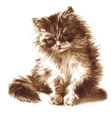 cat by lieff