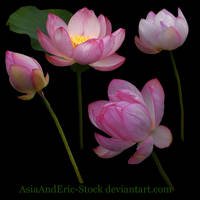 Water lilies by AsiaAndEric-Stock